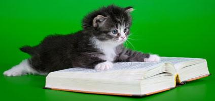 dictionary-kitten-hero