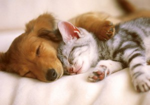 restorative sleep dementias going gentle into that good night
